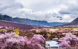 這裡的桃花絕對是國內最美的,不服的可以來比一比