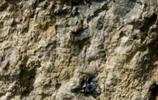 下回出去玩,看到這樣的石頭一定要留意了,很可能是藍寶石原礦