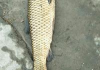 有三米九的紅狼魚竿嗎?用紅狼魚竿釣魚效果如何?