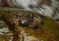一個人,深山密林,黑夜抓石蛙是非常危險的