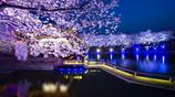 賞櫻季到來!不用去日本,江蘇太湖邊上就有世界三大賞櫻勝地之一