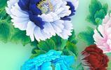 微信壁紙,牡丹迎春,國色天香,風光無限好