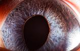 動物世界:特寫的動物眼睛