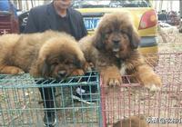 小李帶你逛市裡最大狗市,狗品種很多,就沒有你喜歡的嗎???