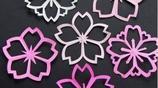 美爆了的剪紙櫻花,真心好美啊!而且簡單易學!多做一些好浪漫~