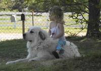 可愛女孩把狗當馬騎,猛打狗頭,畫風突變!