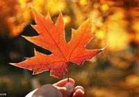 飛花令——秋「100句帶秋字的古詩詞,一片秋葉一段深情」