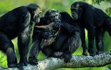 黑猩猩港灣