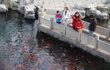 陽春三月:五龍潭觀魚