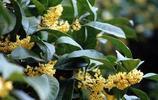 這八種的爬藤花卉一開花就成瀑布,而且香氣能瀰漫半個小區