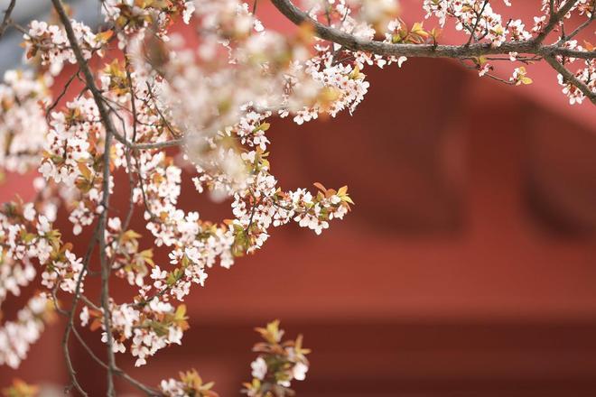 圖蟲靜物攝影:花