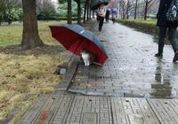 一組很有愛的圖片:前世為貓咪撐過傘的,今生會來愛你!