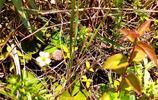 端午郊遊,偶遇大自然的饋贈——野草莓