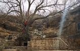 濟南大生態區的千年青檀樹,名泉之檀抱泉,精彩濟南農村內容