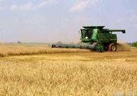 小麥市場成交火爆 小麥價格或被迅速拉昇 小麥收購慾望強烈