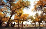 秋季的額濟納胡楊林,儼然一座天然藝術宮殿
