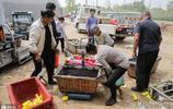 1斤西瓜賣18元  農村男子建9個大棚種西瓜   供不應求年賺50多萬