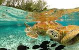 【攝影集】分享16張完美的動物生態攝影作品欣賞