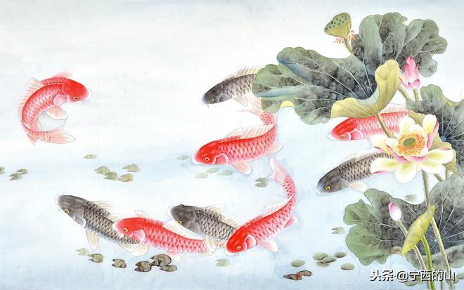 日常迷信,轉發錦鯉帶來好運,各種錦鯉高清壁紙
