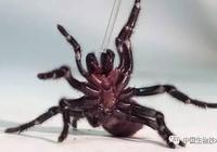 PNAS:致命蜘蛛毒液對中風有奇效