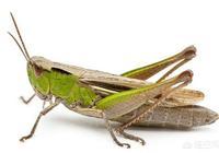 昆蟲會有痛覺嗎?