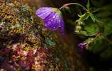 微距鏡頭下的豔麗花朵