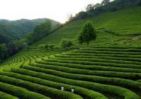 綠茶什麼人不能喝 綠茶適合哪些人喝
