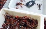 湖北宜昌:菜市場掠影 一隻烏龜與小龍蝦為伍 售價150元