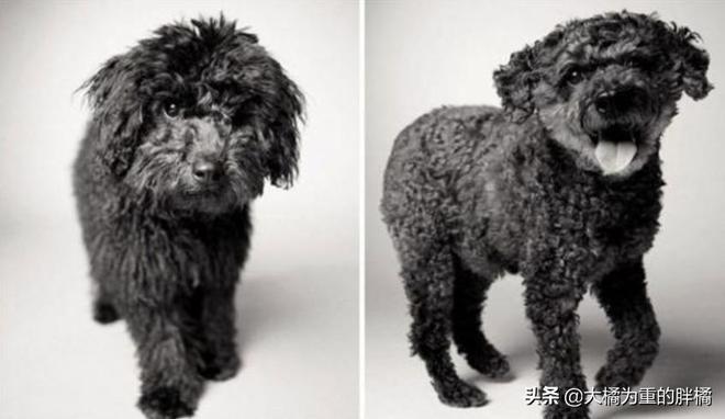 """11只擁有""""凍齡""""的狗狗,從年輕到年老,顏值依舊保持巔峰"""