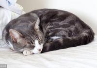 培養貓晚上睡覺的習慣,鏟屎官要做到5點,讓貓晚上吃飽很重要