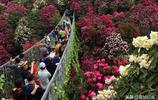 """這個五一繁花盛開被譽為""""世界上最大的天然花園""""--貴州百里杜鵑"""