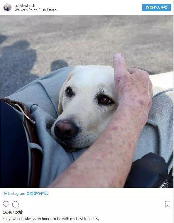 """堅持為主人""""守靈"""",老布什的服務犬是如何訓練出來的?"""