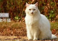 """老年貓的飼養方式""""講究""""很多,做到這些幫助它安享晚年"""