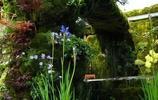 看夠了別墅的繁華,再來看看苔蘚庭院