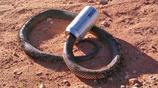 實拍一個多蛇的澳洲,家裡隨時可能竄出一條蛇,對怕蛇的人是災難