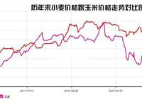 小麥行情:下月開始小麥陸續收割,近期小麥價格較穩