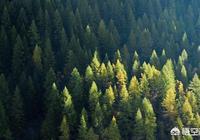 給你工資1000一天,讓你在沒有網絡手機電腦的大山裡做森林管理工作半年,你願意嗎?