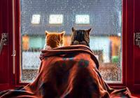 別隨便帶別的貓回家,你問過主子了嗎!