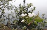 旅行筆記 遊大珠山 賞杜鵑感受春的氣息