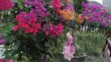 去花卉批發市場看花敗家老公說好不買,又花200多看看買了些啥花