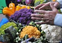 農村種植新型彩色花椰菜,每斤20元,收益是普通花椰菜的三倍!