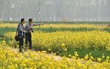 黃河邊的荼蘼,美麗了菏澤鄉村,豐滿了人間四月