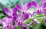 如何巧用花卉增進夫妻感情、助旺桃花?這幾款花卉你得看看