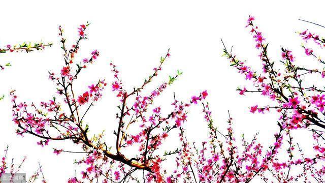 原創:立春