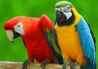 什麼鸚鵡好養?
