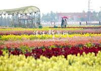 雷州半島現代農業示範核心區 引領湛江多彩田園夢