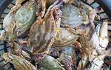 海鮮市場出現兩極分化 好、貴海鮮越來越貴 低檔海鮮受大眾喜愛