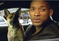 《我是傳奇》那隻忠心狼犬13歲還活跳跳! 威爾史密斯黏它不捨放
