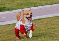 初春暖日,適合訓練狗狗的4個戶外運動