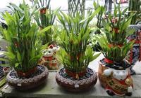生肖配盆栽,尤其適合放在家中,為家增添一份綠意